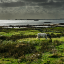 West of Ireland and Connemara
