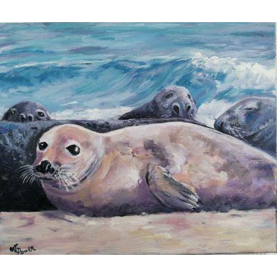 Blasket Seal Cub