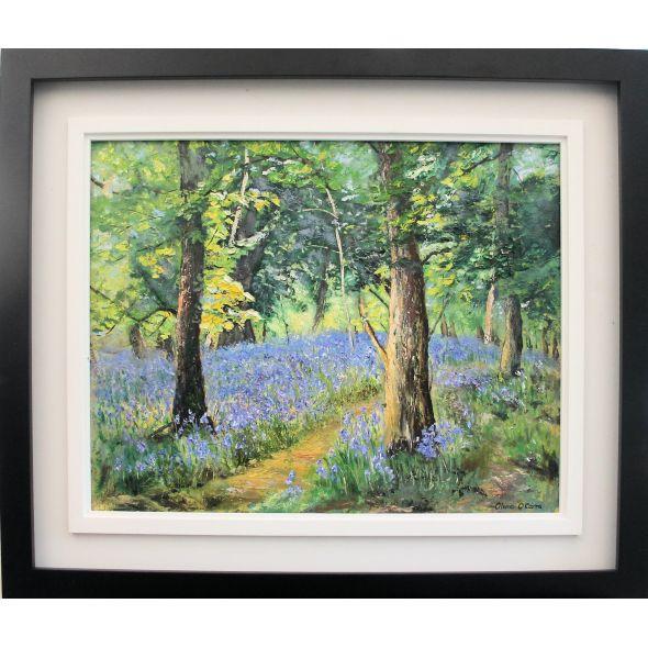 Bluebells Killarney woods