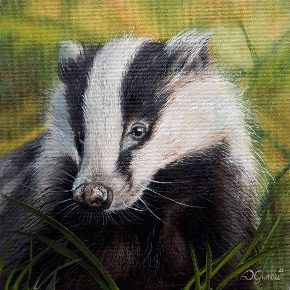 Irish Badger