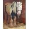 Listowel Pony